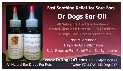 Ear Infection Treatment For Pets